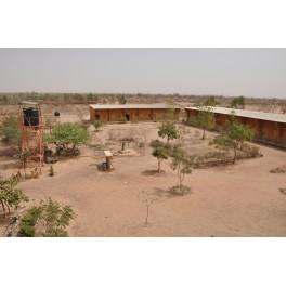 Arbre pour le complexe scolaire de Saaba